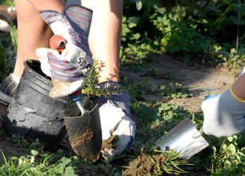 Volunteers Helping Restore the San Dieguito River Park