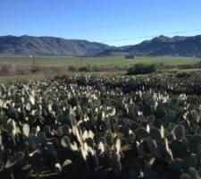 Habitat restoration project