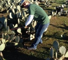 Kelly Conrad cutting cactus
